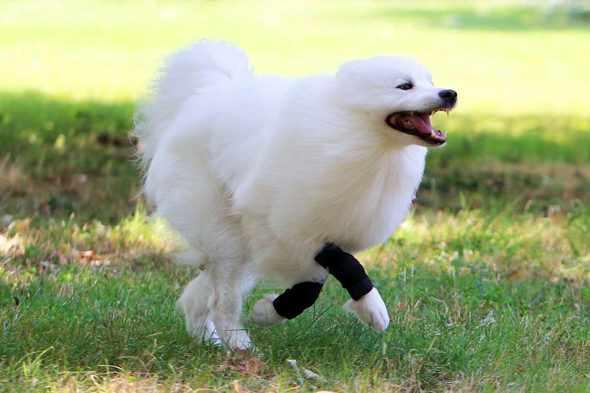 sportbandagen-hunde